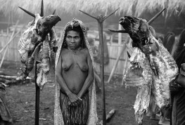 PAPUA NEW GUINEA. The people who inhabited the highlands of New Guinea live for months on a diet of the starchy cau-cau root. Then, one morning, just as dawn is breaking, they massacre thousands of pigs and whole community takes part in a three-day orgy of eating. After this - until the next protein fix (perhaps a year away) - they return to their cau-cau roots. 1973