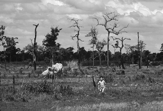 VIETNAM. Defoliated land in the process of being cultivated. The dead trees will be a source of firewood. 1980
