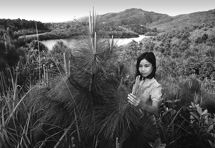 VIETNAM. A Luoi Valley. Checking the tips of the branches for destructive insects among new plantation in a heavily defoliated area. The treeless denuded hills in the distance are covered with scrub - the