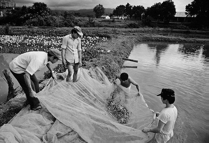 VIETNAM. A Luoi Valley. A contaminated fishpond. Recent tests by the Canadian Hatfield Consultants have shown that these are the most contaminated ponds in Vietnam (and possibly the world), spawning fish deadly with dioxin. 1989