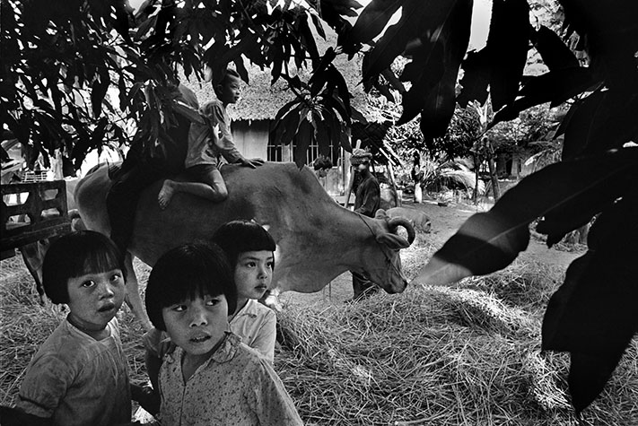 VIETNAM. South Vietnam. The vietnamese village. Rise is traditionally threshed by walking a buffalo over it. This costs nothing and is a pleasant way to spend an evening.1970